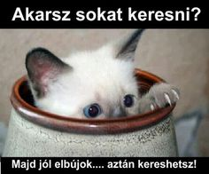 NOBODY PUTS WHISKEY IN A JAR - LOLcats is the best place to find and submit funny cat memes and other silly cat materials to share with the world. We find the funny cats that make you LOL so that you don't have to. Cute Kittens, Cats And Kittens, Baby Animals, Funny Animals, Cute Animals, Animal Babies, Fur Babies, Animal Pictures, Funny Pictures