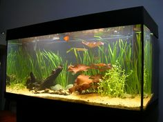 Things to Think About Before Your Aquarium Journey : Freshwater Aquarium