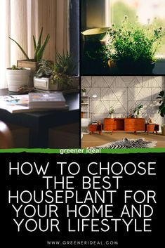 How To Choose The Best House Plants | The Best House Plants As Air Purifier | The Best House Plants For Low Light | The Best House Plants For Your Pet | The Best House Plants For Beginners | The Best House Plants For Your Bedroom | The Best House Plants For Allergies | The Best House Plants For The Dark Rooms | The Best House Plants For Clean Air | Plants For Home | #HousePlants #Plants #lowlight #cleanair