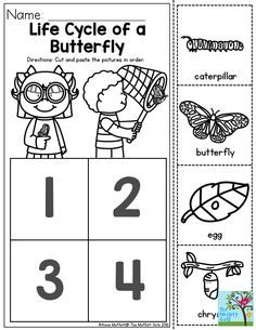 Life Cycle of a Butterfly- You can teach the basic concepts of metamorphosis to children as young as Preschool! This is a great sequencing activity! Preschool Class, Kindergarten Science, Preschool Lessons, Preschool Learning, Kindergarten Classroom, Teaching, Butterfly Life Cycle, Lifecycle Of A Butterfly, Sequencing Activities