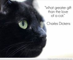 What greater gift than the love of a cat?