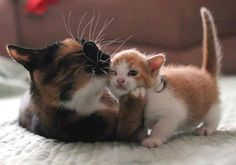 is mother's love!