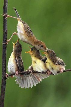 Pretty Birds, Beautiful Birds, Animals Beautiful, Animals And Pets, Baby Animals, Cute Animals, Kinds Of Birds, Tier Fotos, Colorful Birds