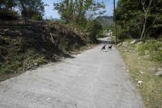 """Two little wild goats crossing the road - don't think the """"Look Both Ways"""" Rule applies to them..."""