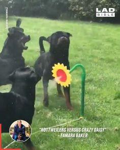 Keeping them entertained 😄😊 - puppydogs - Hunde bilder Funny Animal Videos, Cute Funny Animals, Funny Animal Pictures, Cute Baby Animals, Animal Memes, Funny Cute, Funny Dogs, Animals And Pets, Cute Puppies