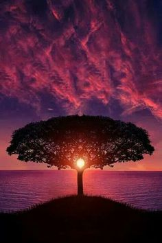 Beautiful Sunset Silhouette of a Tree with the sun in perfect position and the glorious pinks and purples.