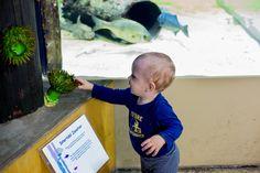 Santa Monica Aquarium | Price Life Photography