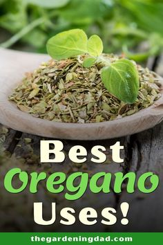 Do you want not only better Oregano this use, but also better uses for it? Then read this easy guide to Best Oregano Uses to learn growing, caring, harvesting, and uses of oregano! Cooking With Fresh Herbs, Herbs For Health, Healthy Lifestyle Tips, Natural Supplements, Growing Herbs, Medicinal Herbs, Nutrition Tips, Real Food Recipes, Herb Garden