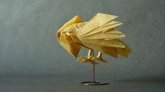 cooper's hawk by rhplus