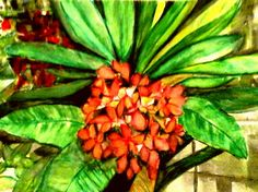 Frangipani Beauty  Artwork by Artist Sharon Wood  Watercolour on 300 gsm paper  swoody@internode.on.net