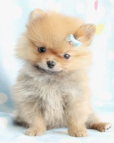 36 Best Cute Dogs Images On Pinterest Pets Cute Dogs And Cute