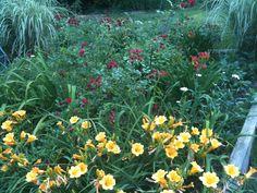 My backyard flower garden during peak growing time.