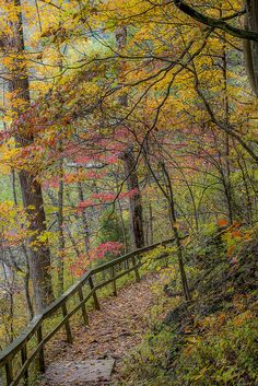 """""""Happiness is the intoxication produced by the moment of poise between a satisfactory past, and an immediate future, rich with promise."""" ~ Ella Maillart  --  Fall Trail by Bernie Kasper ~ Clifty Falls State Park Madison Indiana**"""