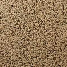 STAINMASTER Active Family Feature Buy Dana Point Pattern Indoor Carpet