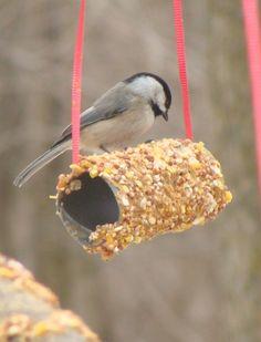 Hoy os enseñamos cómo hacer un sencillo comedero para pájaros y así obtener todos los beneficios de atraer biodiversidad a nuestro huerto y jardín. Este taller es ideal para hacerlo…