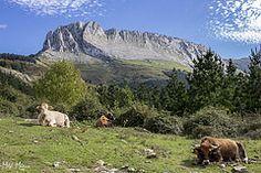 Lekanda (mikiwinki) Tags: horses mountain caballo caballos cows 55mm monte euskadi basquecountry vaca vacas 18mm gorbea pasvasco itxina macizo lekanda 700d