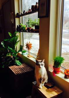 Window plants plus a bonus cat. I can't wait until I can have things on windowsills again without little hands destroying them.