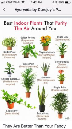 plants & plants - plants indoor - plants in bedroom - plants aesthetic - plants that repel mosquitos - plants that dont need sunlight - plants in bathroom - plants in living room Best Bathroom Plants, Good Plants For Bedroom, Plants For Kitchen, Bathroom Flowers, Plants For Room, Bathrooms With Plants, Plants In Pots, Bathroom Ideas, Kitchen Herbs