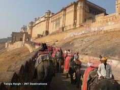 #Elephant #Trek #Rajasthan #Palaces #India #Goldentriangle #Tours
