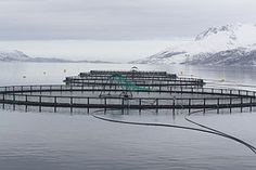 English: Fish cages in Velfjorden, Brønnøy, No...
