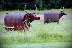 Would love to put a couple of these fellas in the field by our house.