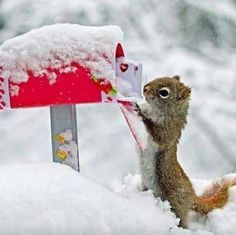 Squirrel mail snow