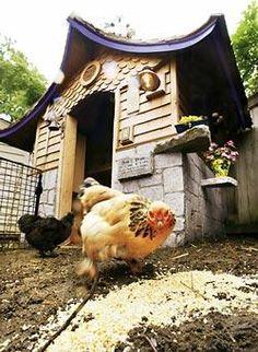I love this backyard chicken coop!