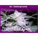 Melon Gum - BDU.005-4F