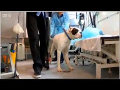 David Gandy on 'Paul O'Grady: For The Love of Dogs' Show    Battersea Dogs & Cats Home; Ambassador David Gandy, Model