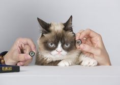 Internet Sensation Grumpy Cat Not Happy To Be Named First Madame Tussauds Cat  Madame Tussauds San Francisco announces animatronic for celebrity frowning feline