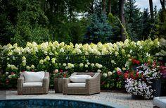 10 Breathtaking Hydrangea Gardens - Most Beautiful Gardens Bobo Hydrangea, Little Lime Hydrangea, Hortensia Hydrangea, Limelight Hydrangea, Hydrangea Garden, Hydrangea Landscaping, Pool Landscaping, Hydrangea Paniculata Phantom, Small Gardens
