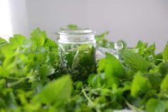 Melisa jest jednym z ziół, które często pojawiają się w zielarstwie, w książkach kucharskich.. Ma działnie uspakajające, relaksacyjne, przeciwutleniające... Good To Know, Mason Jars, Healing, Herbs, Nature, Plants, Naturaleza, Planters, Plant
