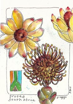 painting proteas by janelafazio, via Flickr