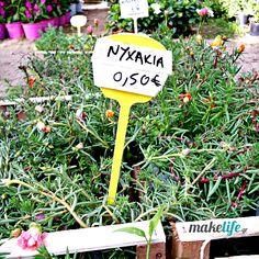 πορτουλάκα ή νυχάκι Home And Garden, Plants, House, Home, Plant, Homes, Planets, Houses