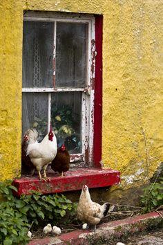 Window | Inishmore, Clare, Ireland