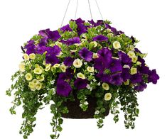 flowers plants shrubs bedding trees grave pots memorial artificial fresh hanging baskets all home and garden supplies