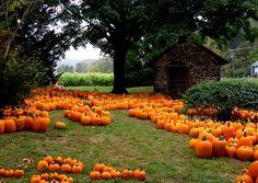Bucks County Pick Your Own Pumpkins + Pumpkin Patches