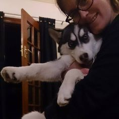 Lincoln As A Baby Husky What A Sooky Boy He Was Now He Is Very