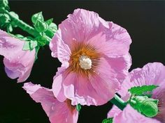 Hollyhocks---acrylic-on-canvas by Jason de Graaf---I was looking for reference photos and came across this beautifully and magnificently executed work of art!!! So perfect.