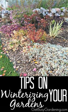 People have been asking about what they need to do to winterize their gardens. Great question! Here are Tips on Winterizing Your Gardens | GetBusyGardening.com