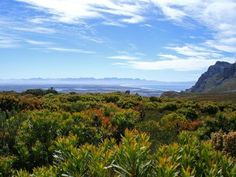 Silvermine Nature Reserve - An oasis of fynbos for hiking & relaxing, Noordhoek CapeTown Nature Reserve, Oasis, Things To Do, New Homes, Hiking, Adventure, Mountains, Travel, Things To Make