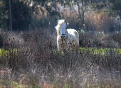 by TracyGymellasPhotography on YouPic Canon Eos 1100d, Canon Ef, Kos, Breeze, Horses, Spring, Nature, Photography, Animals