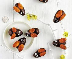 Schokoladen-Maikäfer