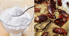 How To Keep Cockroaches, Ants, Mosquitoes and Flies Out of Your House, With Natural Remedies Eucalyptus Citronné, Ants, Clean House, Cleaning Hacks, Natural Remedies, Pudding, Desserts, Blog, Mosquitoes