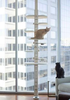 I'm always on the lookout for attractive pre-made shelving that could be used to create cat climbing walls. Here are a few of my finds that you could easily mix and match to create a wonderfully creative cat climbing wall:. Cat Climbing Wall, Cardboard Cat House, What Cats Can Eat, Cat Fountain, Cat Hotel, Cat Perch, Cat Towers, Cat Hammock, Cat Playground