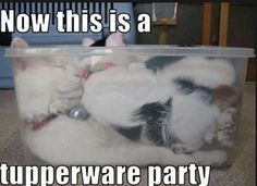 Tupperware party