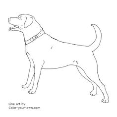 dog labrador retriever coloring page