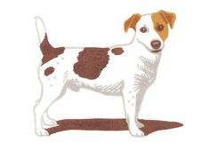 'Jack Russell' By Nick Wonham. Blank Art Cards By Green Pebble.  www.greenpebble.co.uk