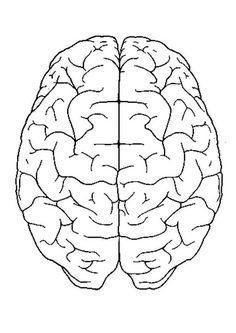 28 Blank Brain Diagram To Label - Wiring Database 2020