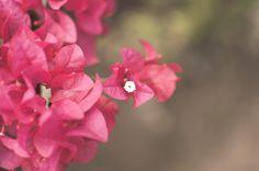 Spirit of Spring by Monirul Islam on 500px